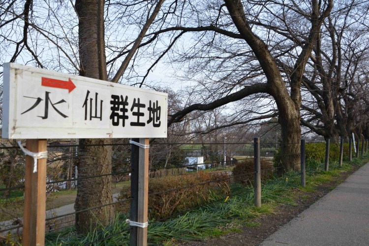 gongendo-suisen_20160121_4