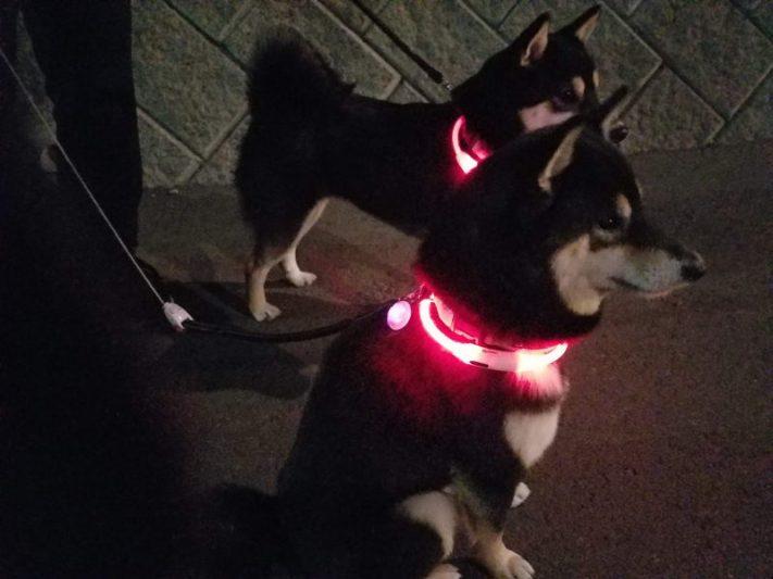 犬の首輪に付けるライトの比較