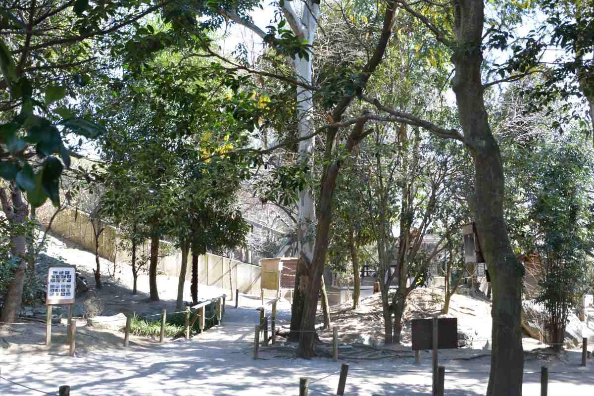 埼玉キャンベルタウン野鳥の森