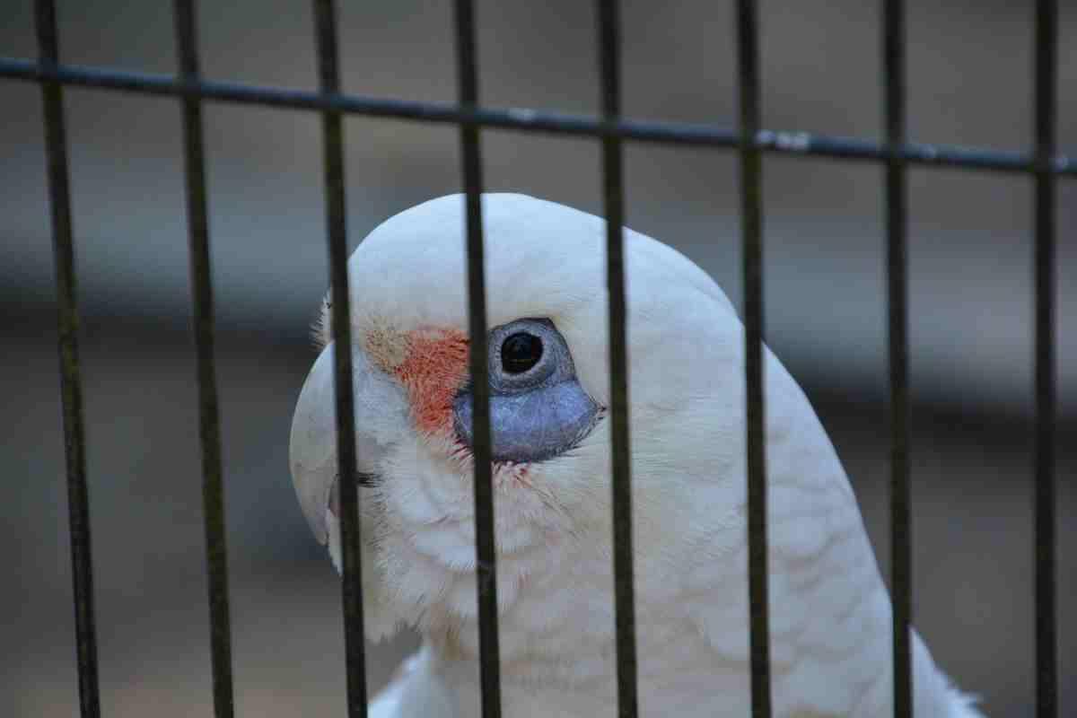 キャンベルタウン野鳥の森の