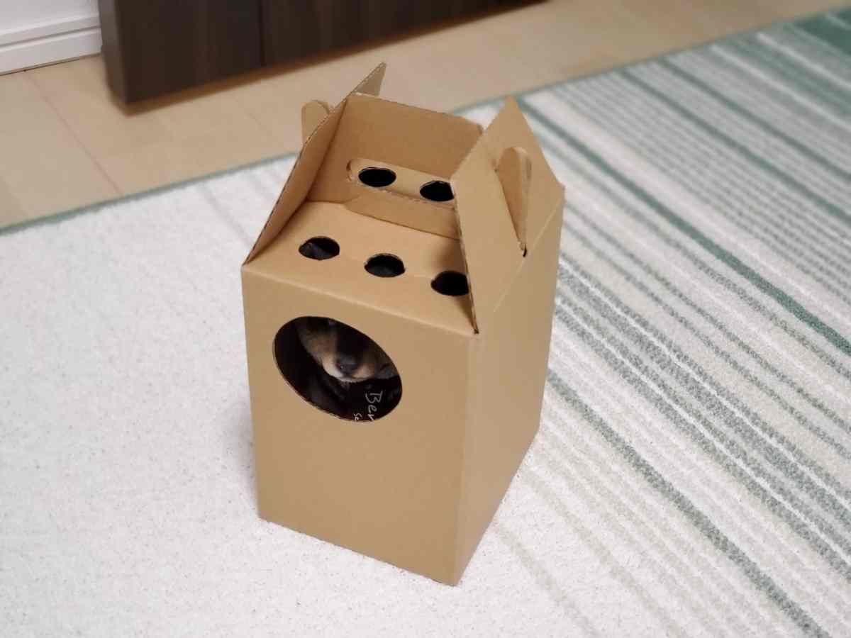 箱に入っている犬の置物