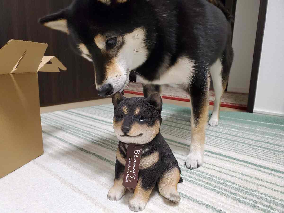 黒豆柴の置物の耳のにおいをかいでいる犬(ひめ)