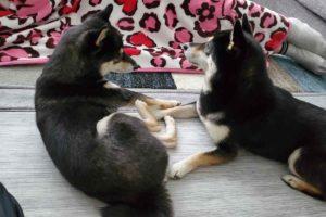 ママに寄り添う犬(ひめ)と犬(うみ)