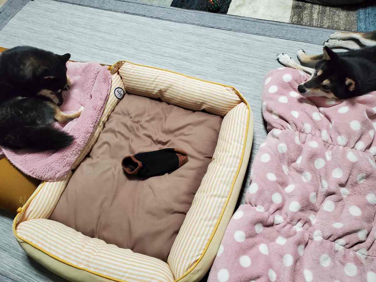 犬(ひめ)と犬(うみ)に靴下が置いてある