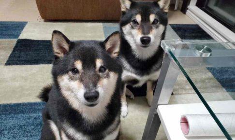 犬(ひめ)と犬(うみ)がこっちを見ている