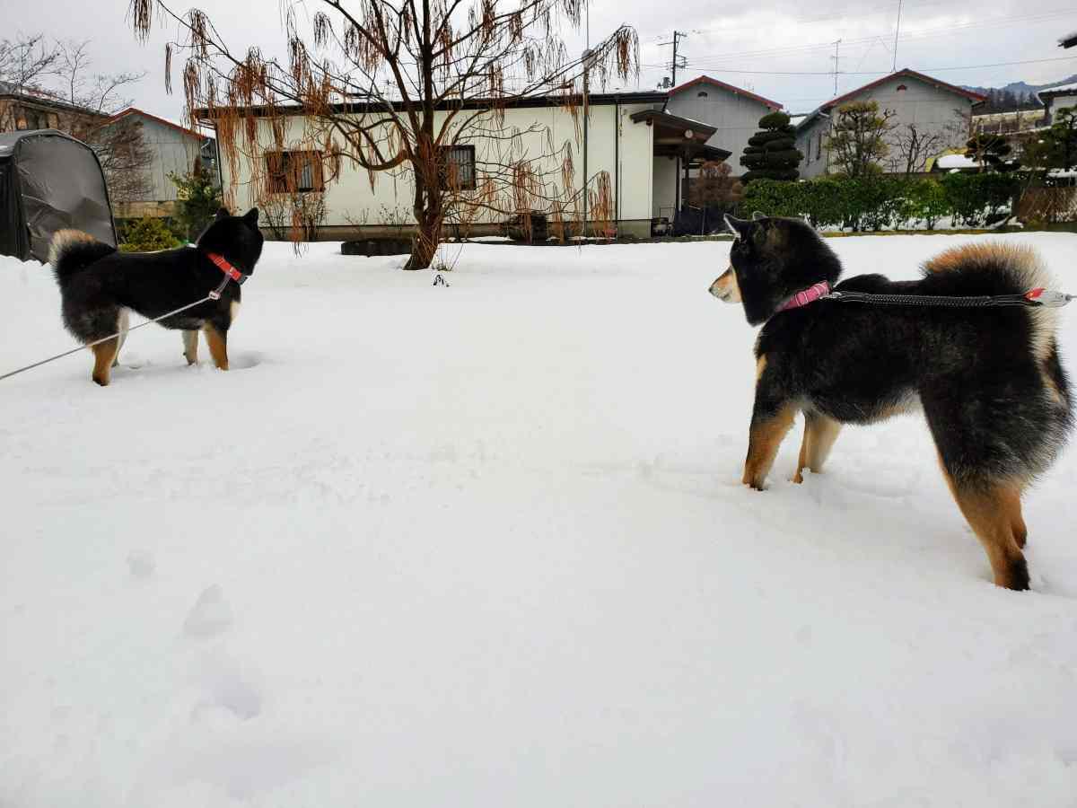 後ろの木を見ている犬(ひめ)と犬(うみ)