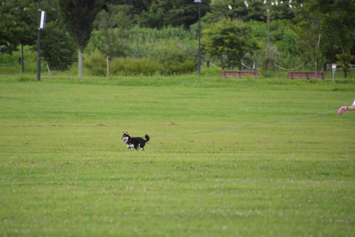 走っている犬(ひめ)