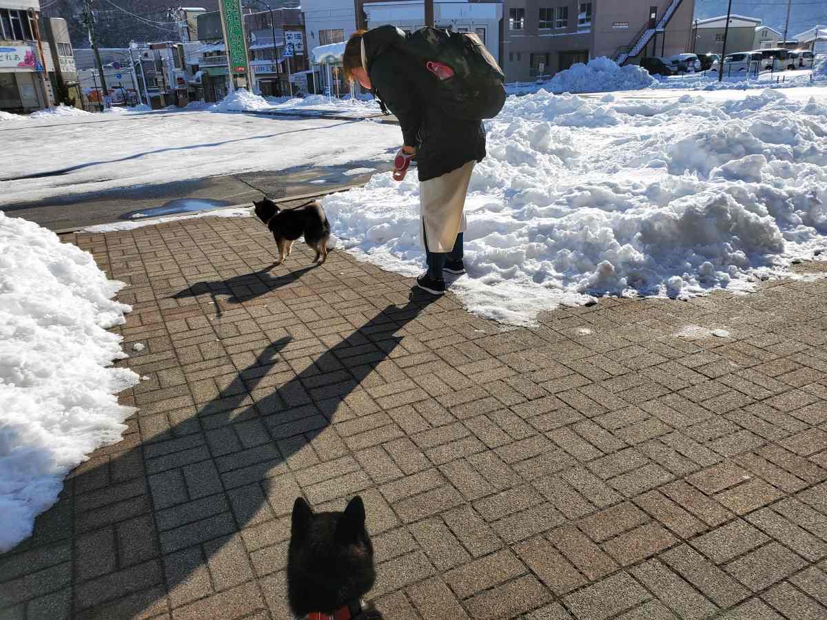 妻と犬(うみ)が散歩しているところを見ている犬(ひめ)