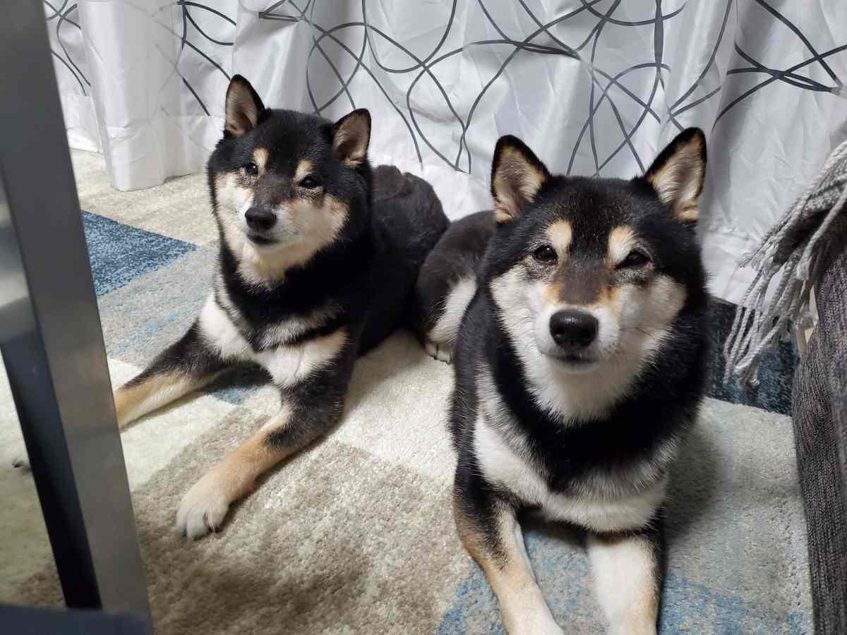 ふせをしている犬(ひめ)と犬(うみ)
